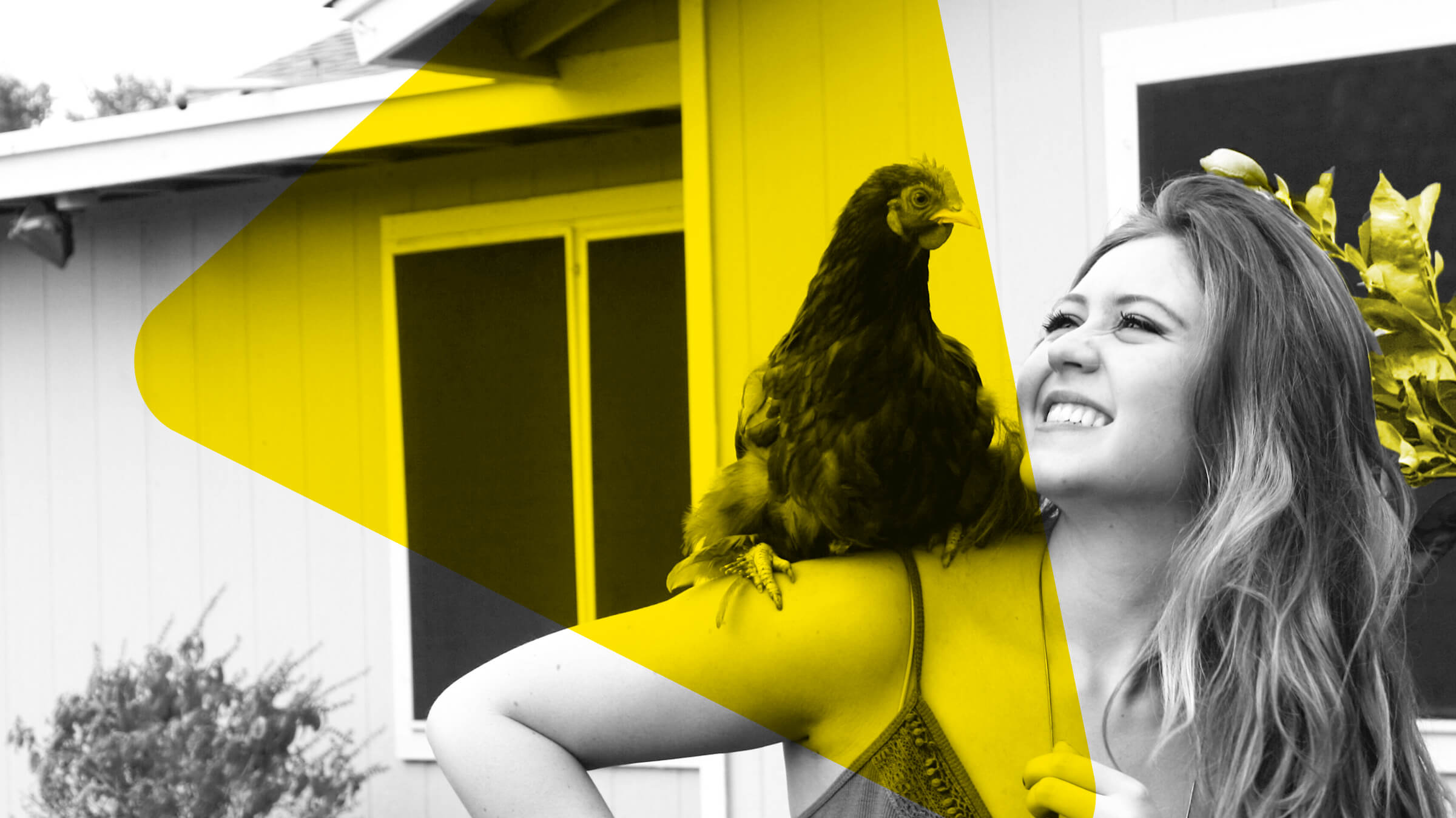 Insurance and recognizing the value of big chickens